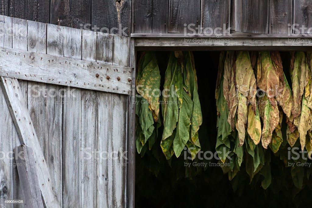 New England Tobacco Barn stock photo