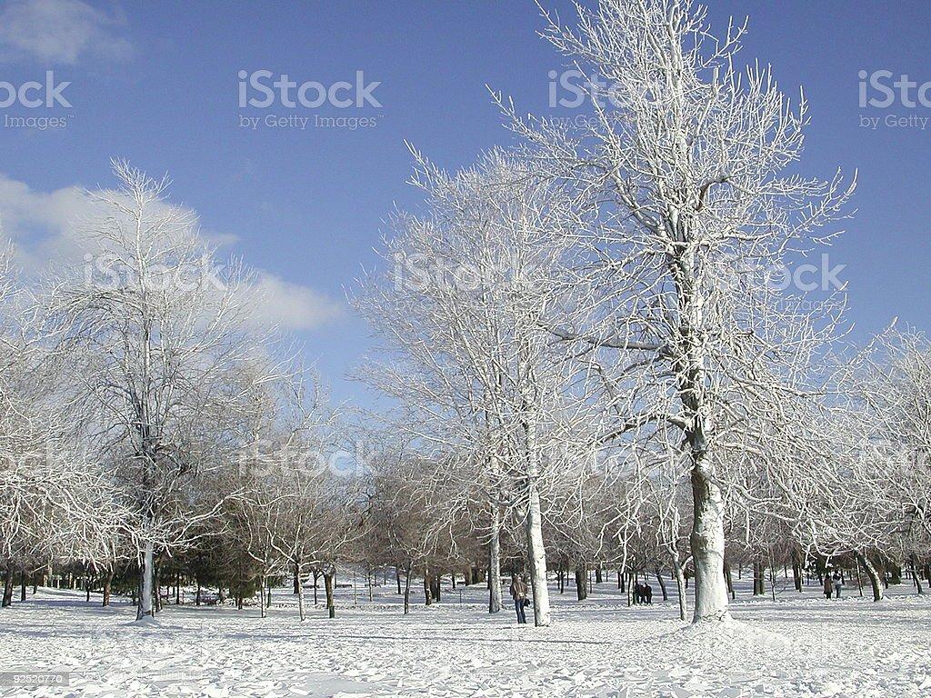New fallen snow royalty-free stock photo