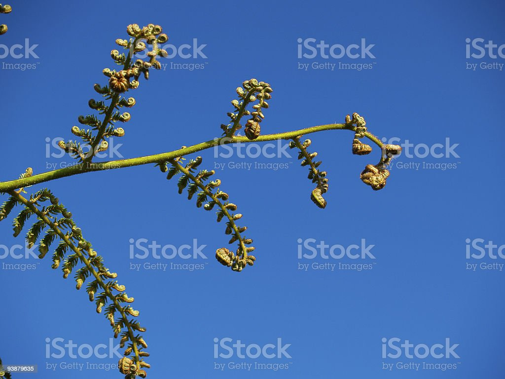 New fern frond stock photo