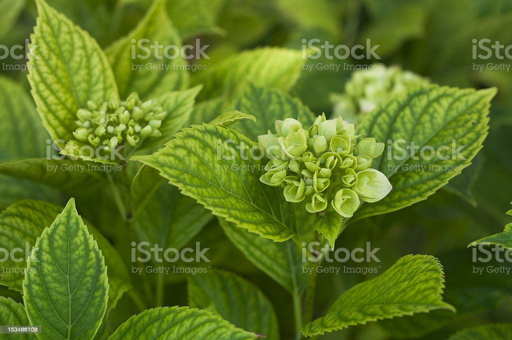 New flower and green leaves royalty-free stock photo