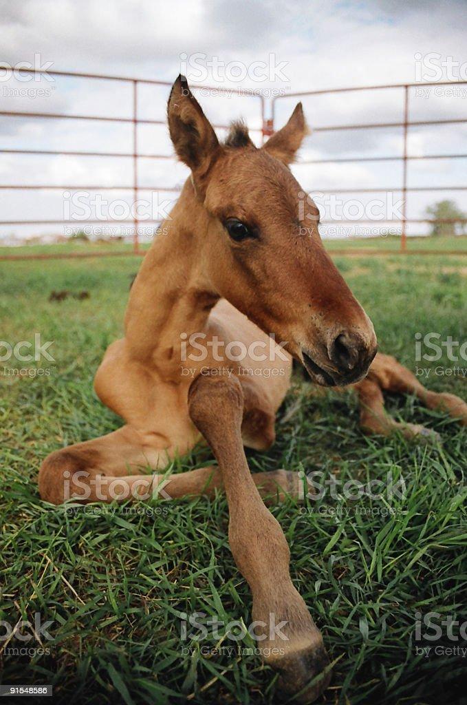 New Foal stock photo