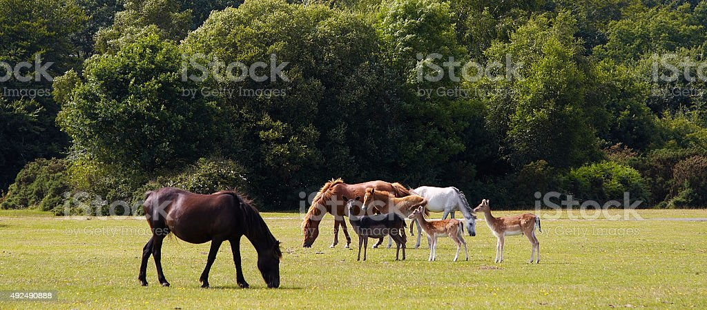 New Forest, England stock photo