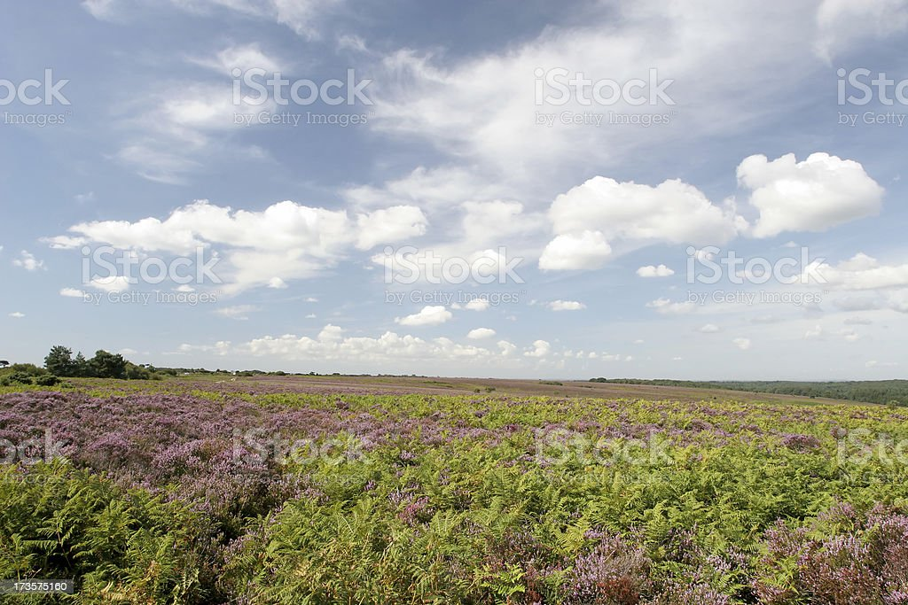New Forest Landscape royalty-free stock photo