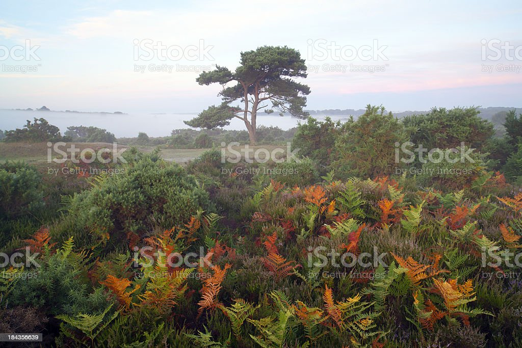 New Forest National Park stock photo