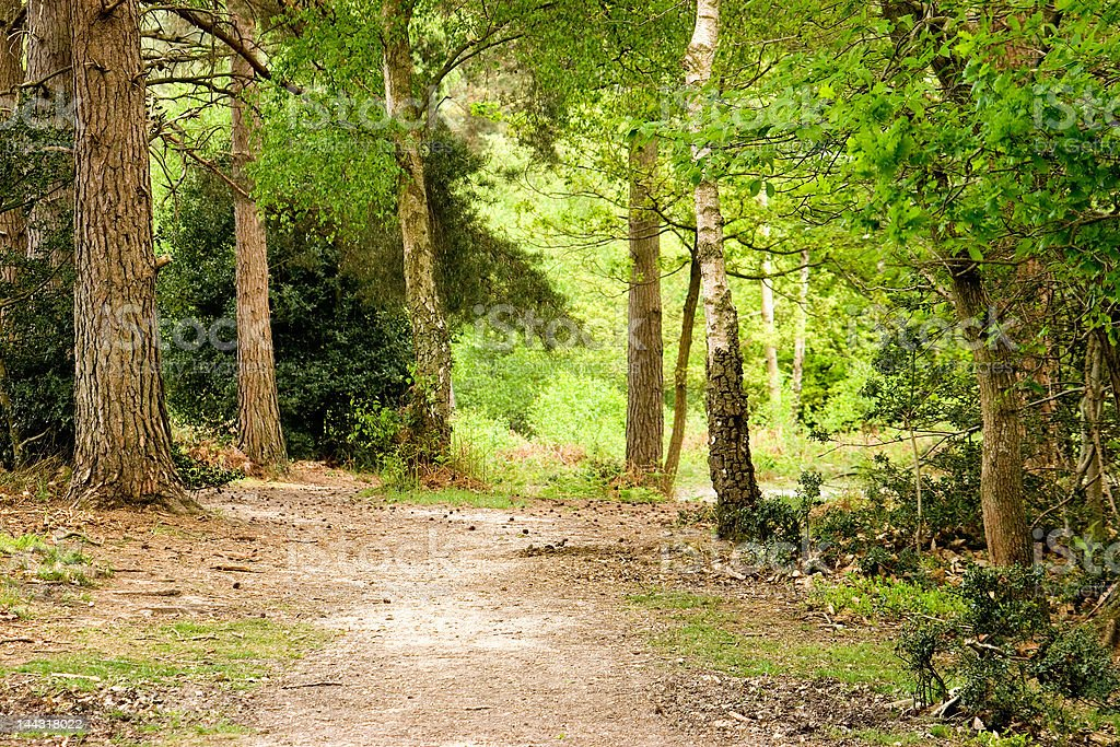 New Forest Track royalty-free stock photo