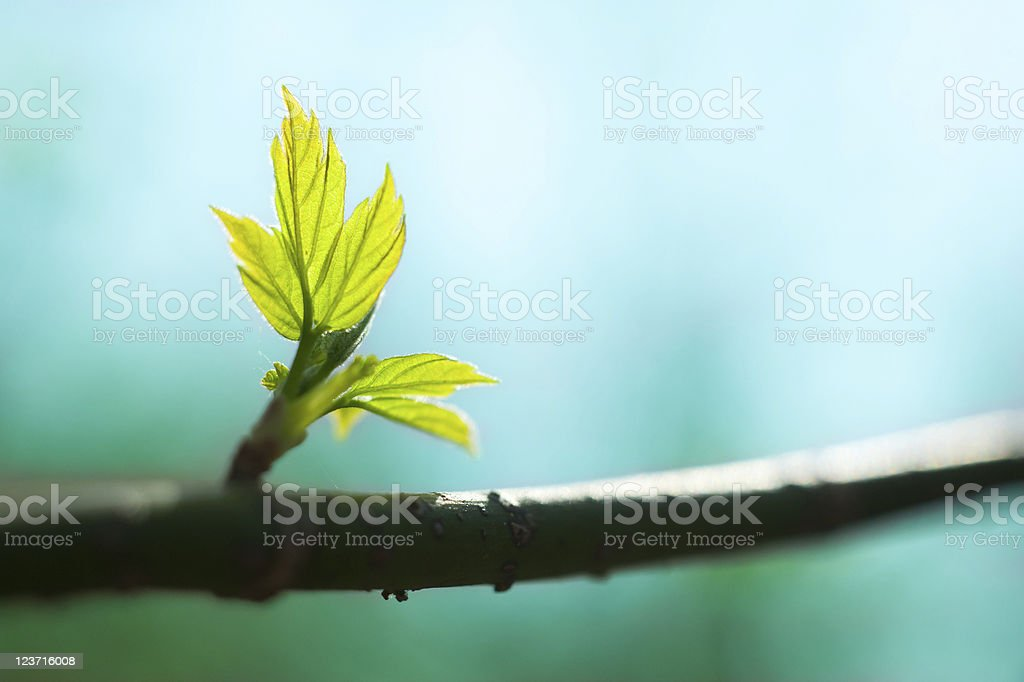 New fresh leaves on a branch stock photo