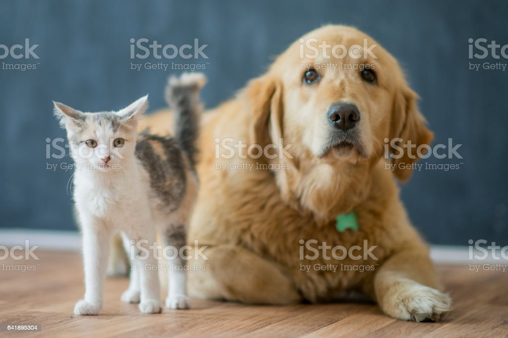 New Friends stock photo