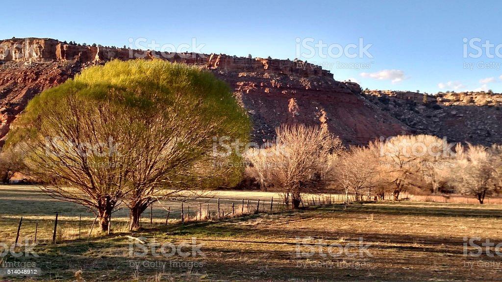 New Globe Willow trees pastures dusk Grafton Road Rockville Utah stock photo