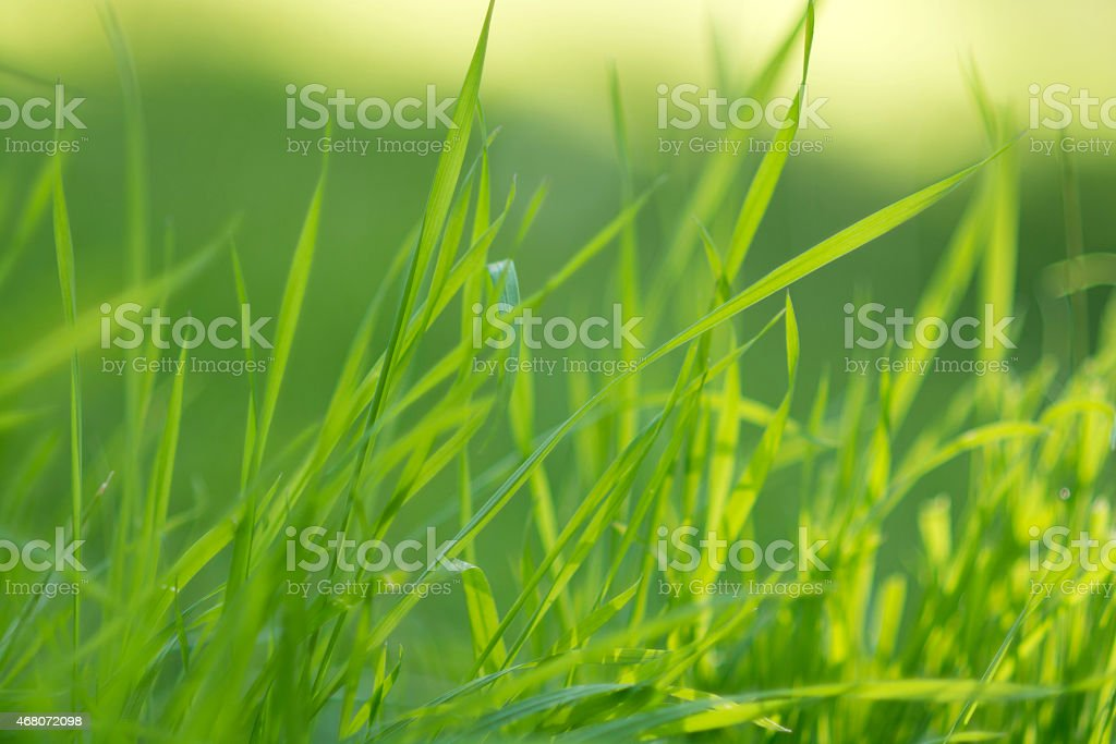 New grass on spring stock photo