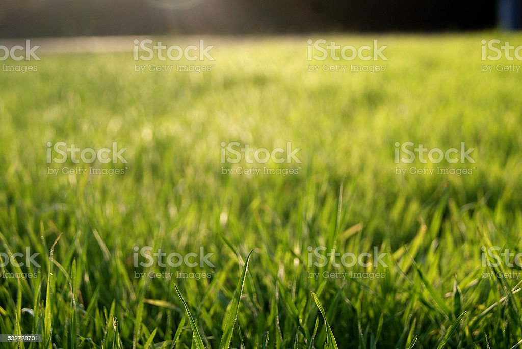 New Grass royalty-free stock photo