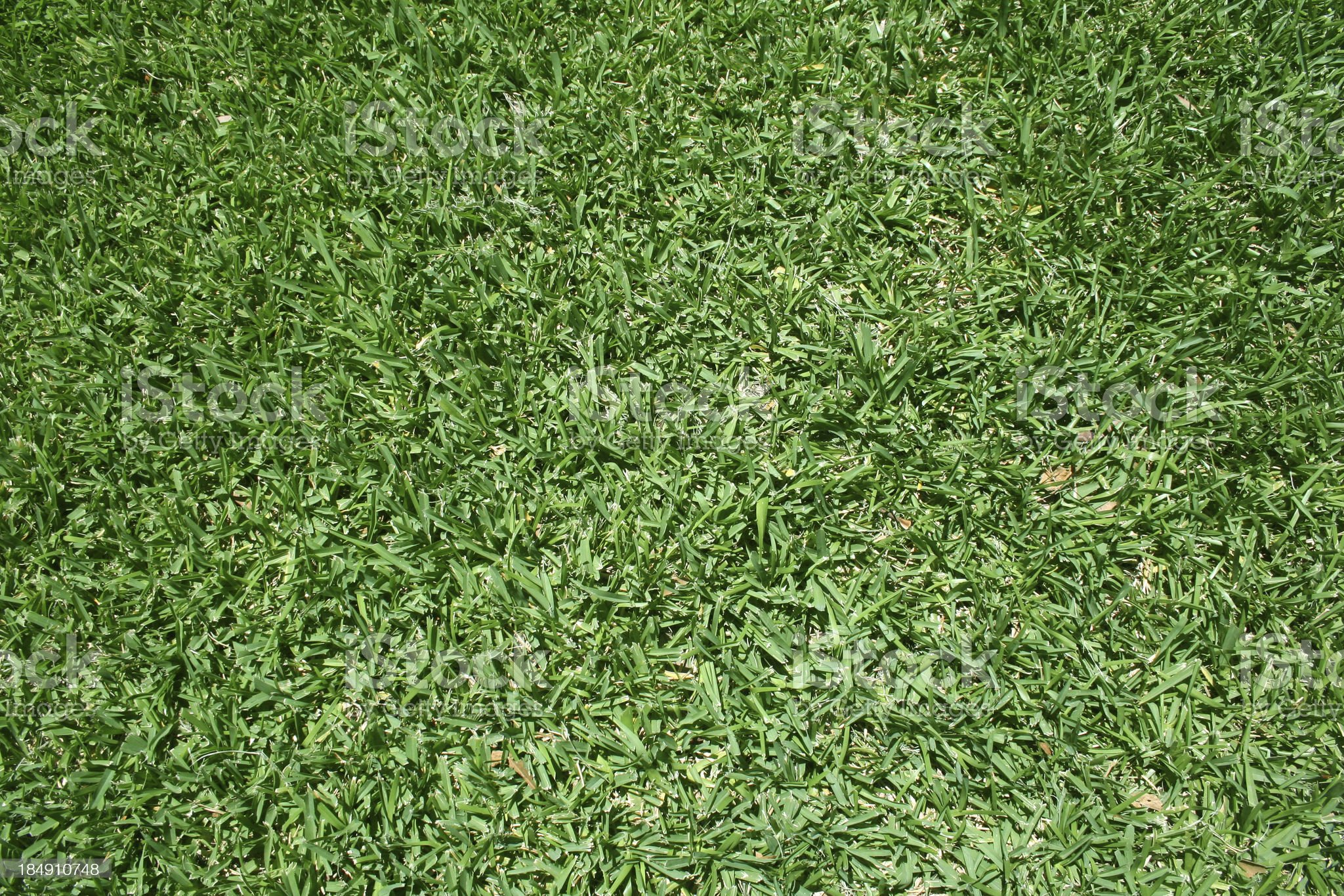 New Green Grass background royalty-free stock photo