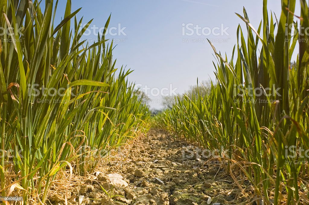 New green growth royalty-free stock photo