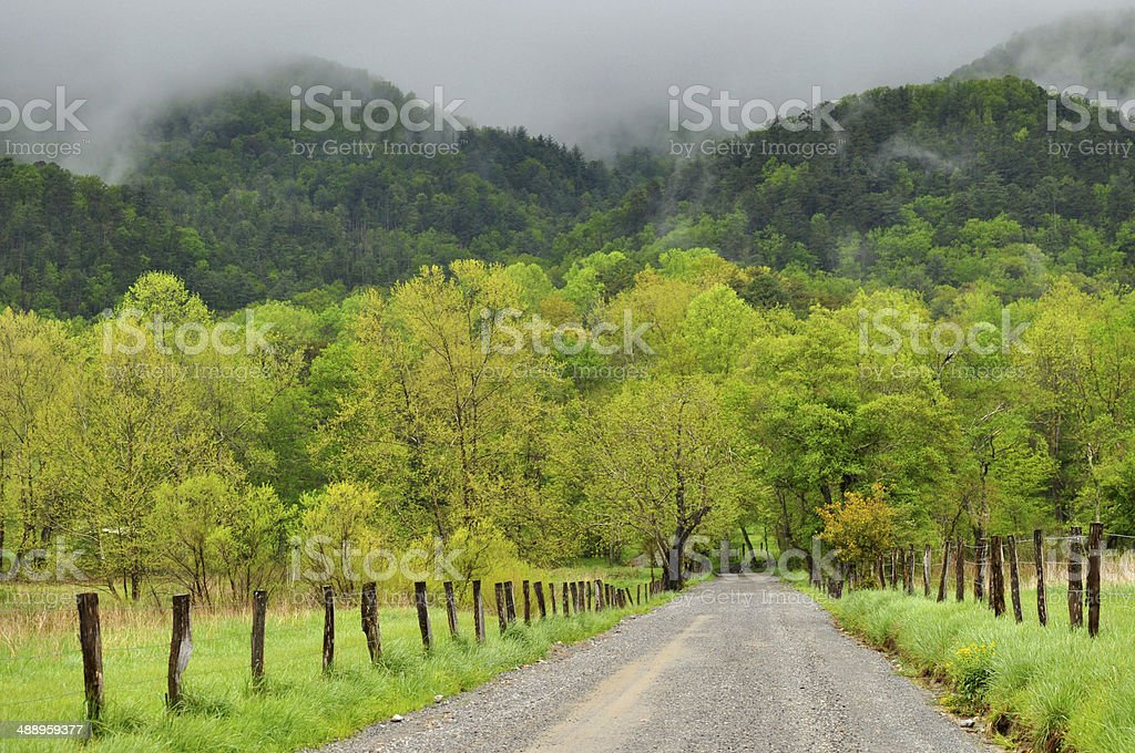 New green leaves and fog surround a mountain road. stock photo