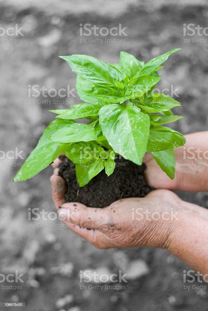 New green life royalty-free stock photo