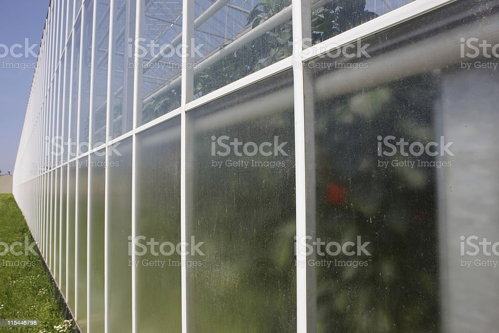 New Greenhouse Close-up royalty-free stock photo