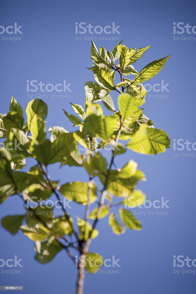 new growth branch royalty-free stock photo