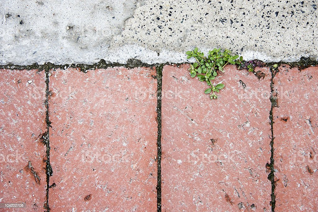 New growth breaking through paving royalty-free stock photo