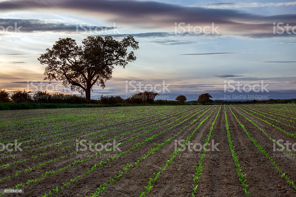 New Growth - Farmland - Agriculture stock photo