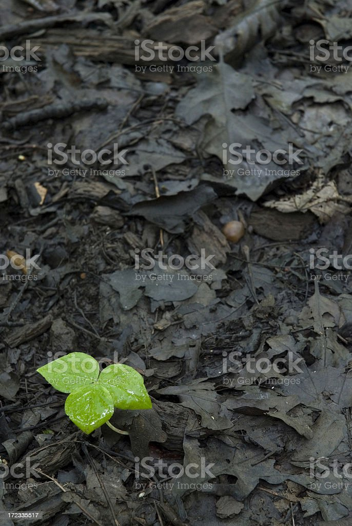 New Growth in the Forest royalty-free stock photo