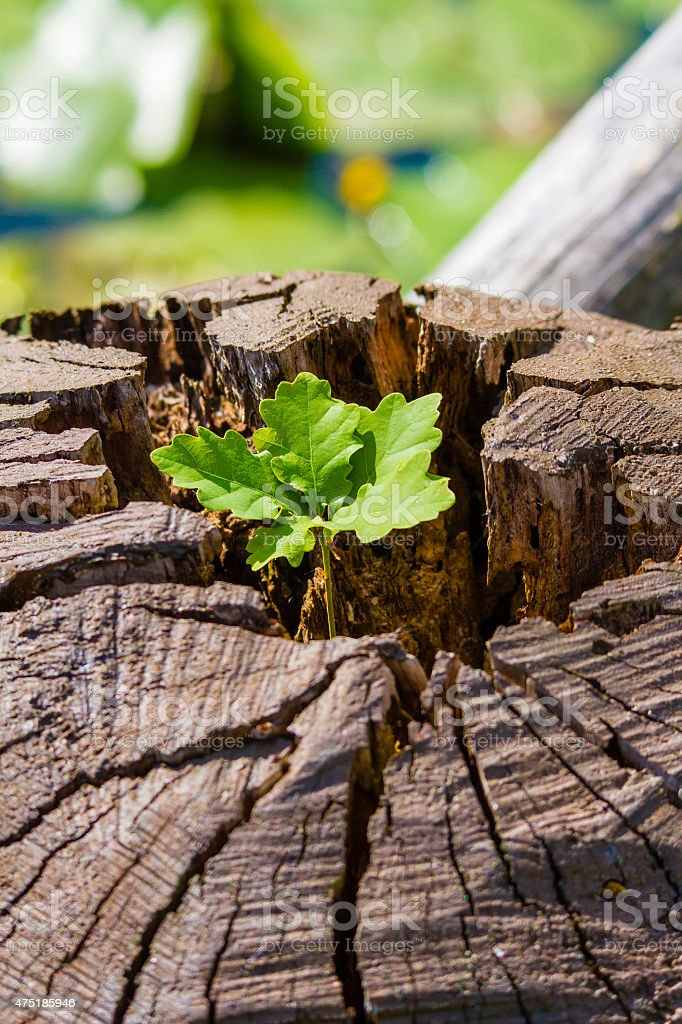 New growth on a fallen tree stock photo