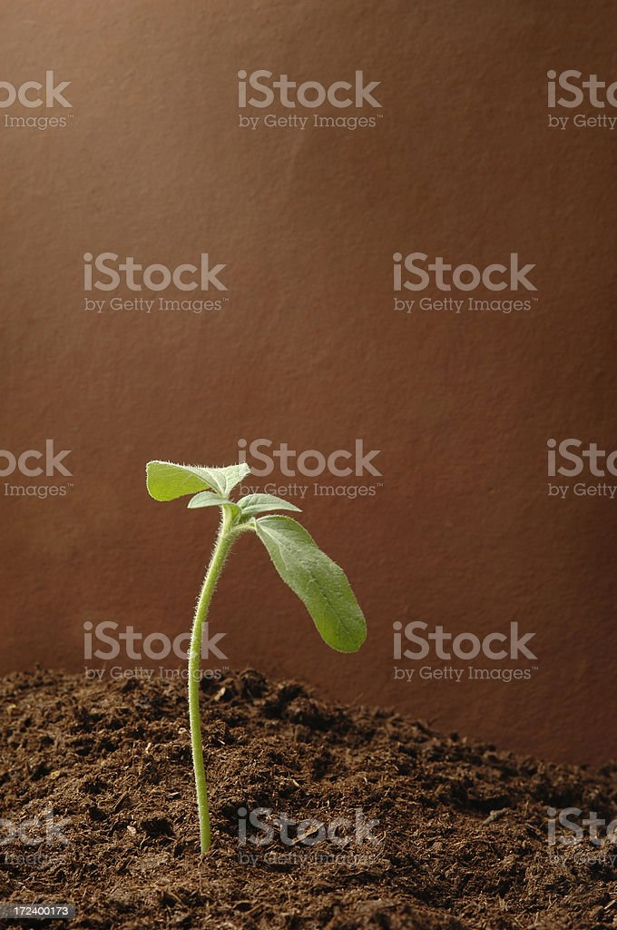 New Growth royalty-free stock photo