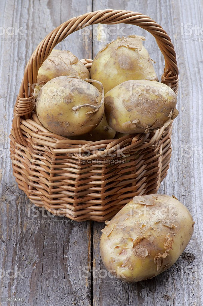 New Harvest Potato stock photo