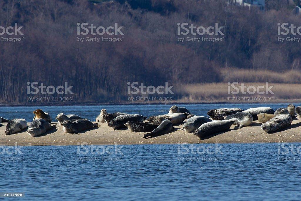 New Jersey Seals stock photo