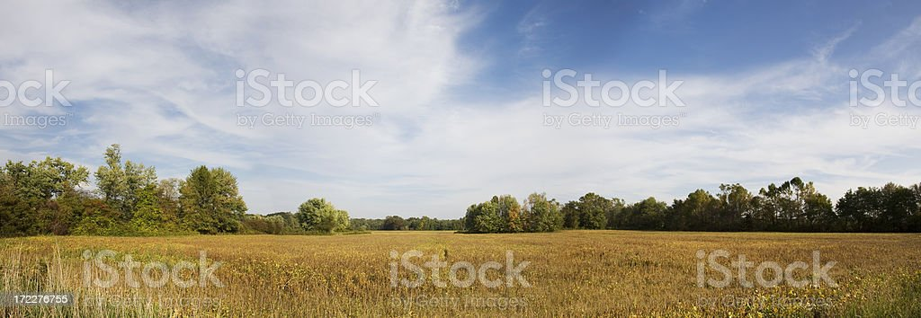 New Jersey Soybean Field Crop with Autumn Sky Panorama stock photo