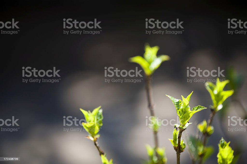 New leaves royalty-free stock photo