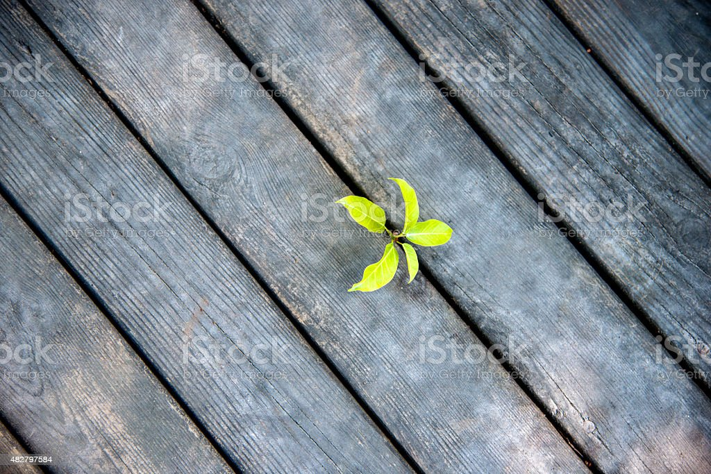 new life come from wood plan stock photo