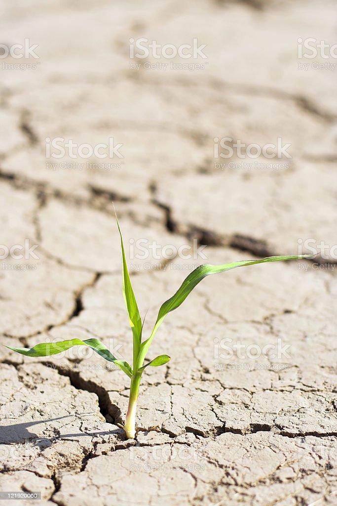 new life - fresh plant in desert royalty-free stock photo