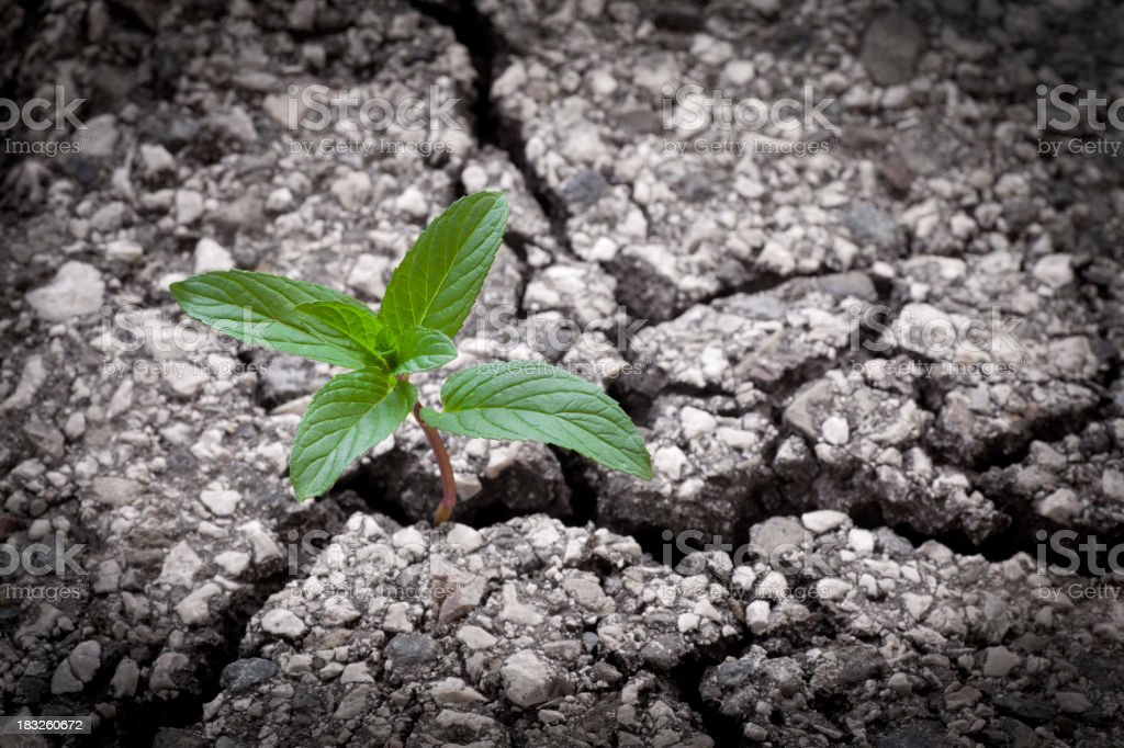 New Life. Green plant from the asphalt. royalty-free stock photo