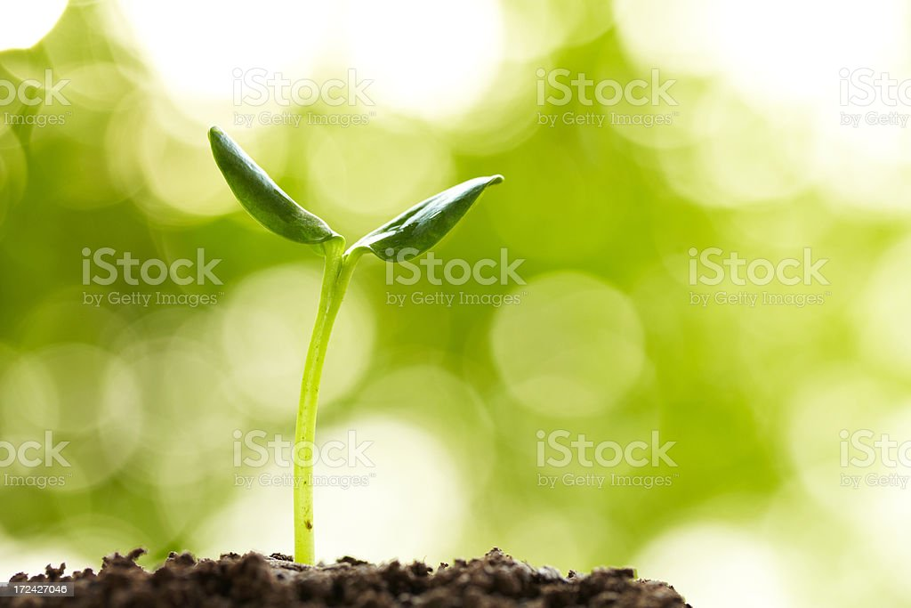 new life growing in spring stock photo