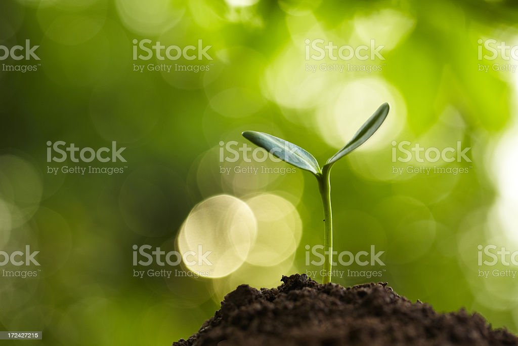 new life growing in spring royalty-free stock photo