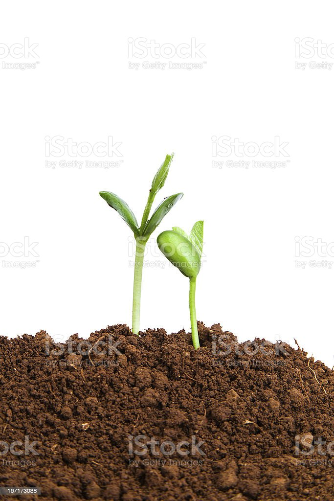 new life growing in spring:love and care royalty-free stock photo