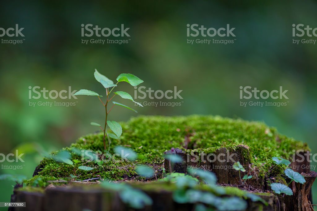 New life growing stock photo
