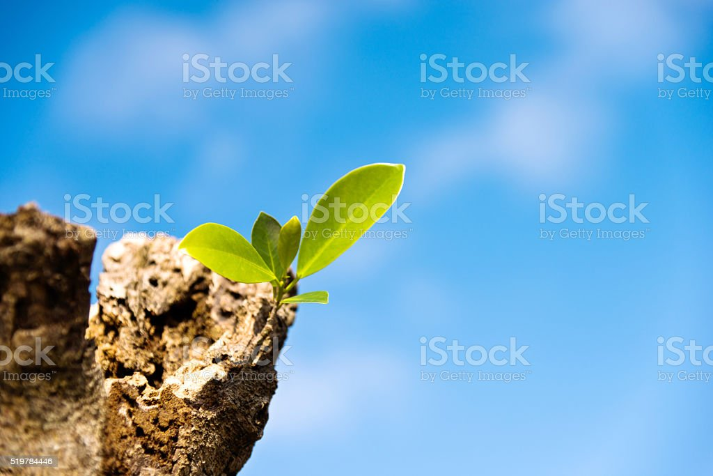 New life growth up stock photo