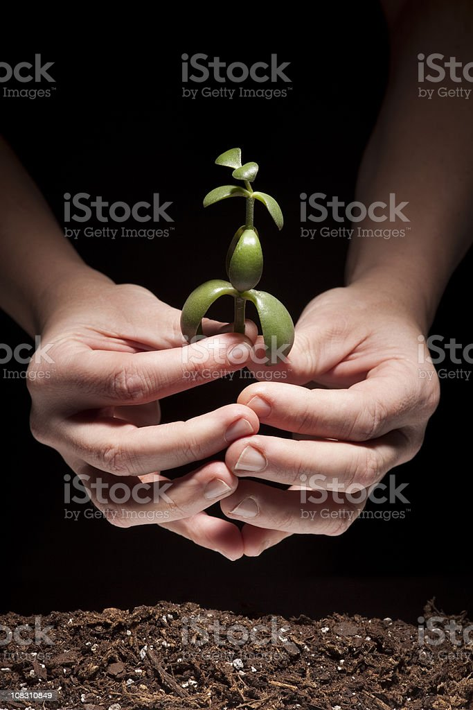 New Life; Hands holding, Planting Tiny Green Plant in Soil stock photo