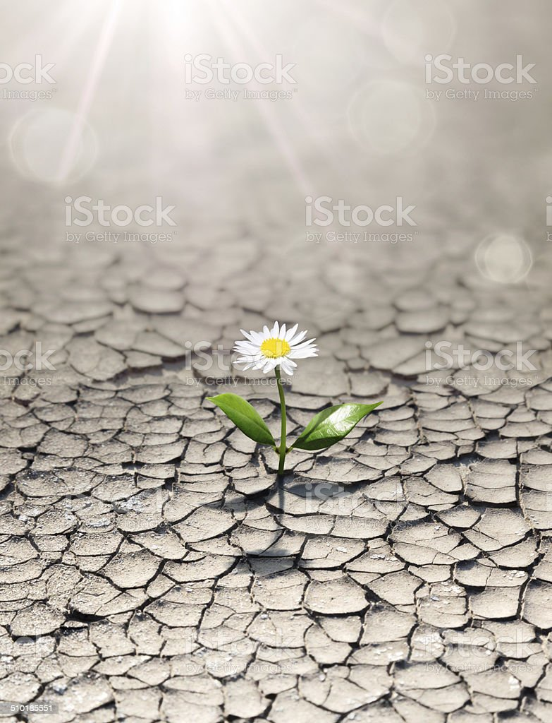 new life in arid land stock photo