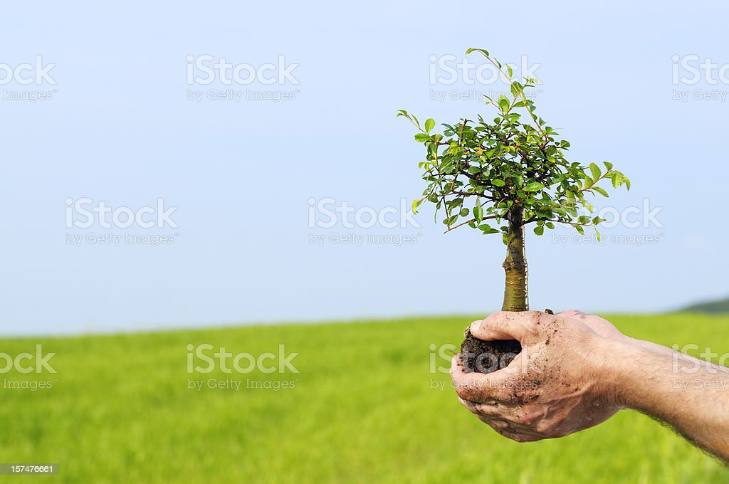 New Life in Hand royalty-free stock photo