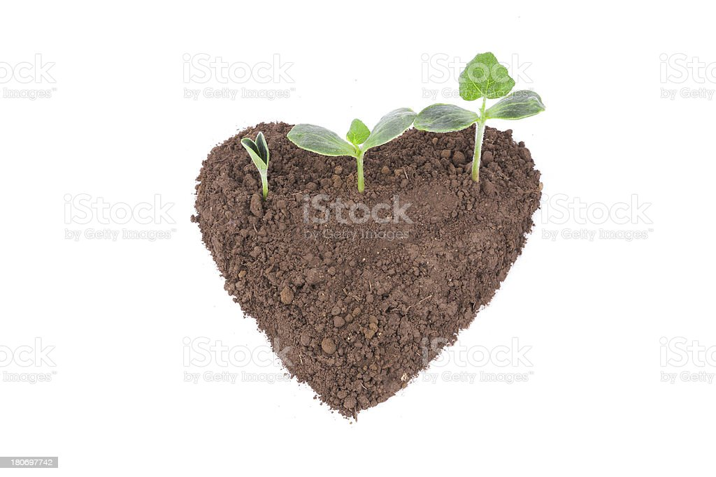 new life in heart shape dirt isolated on white background stock photo