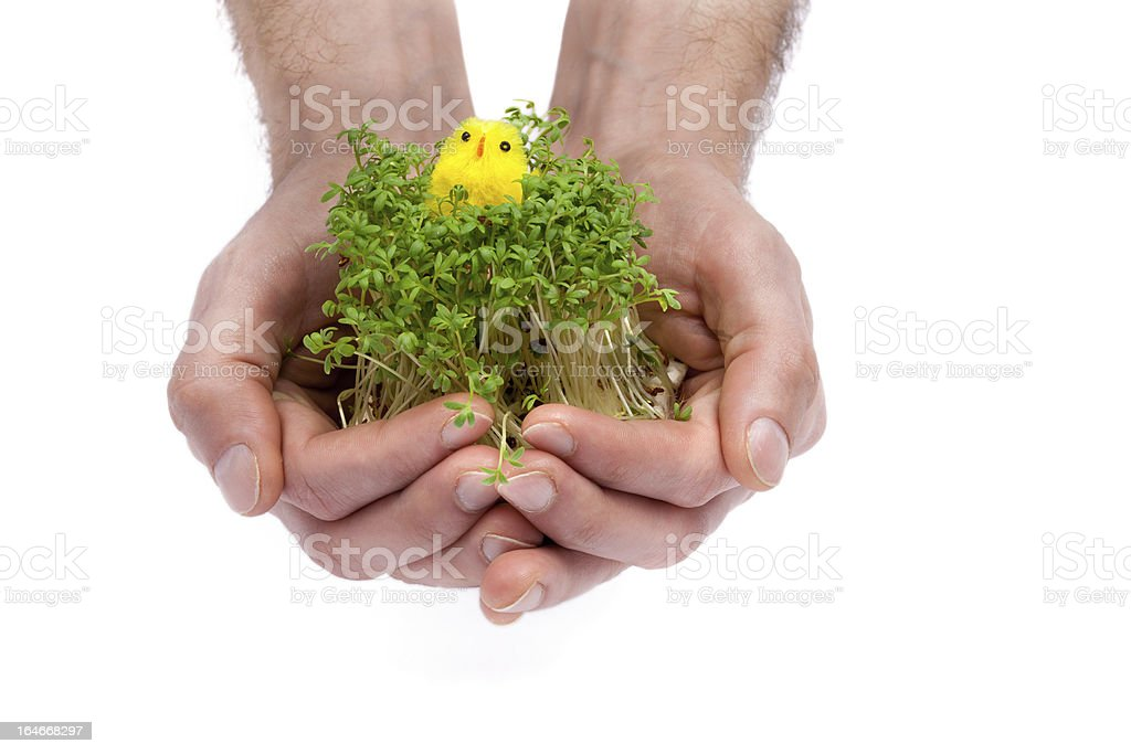 New Life in Your Hands royalty-free stock photo