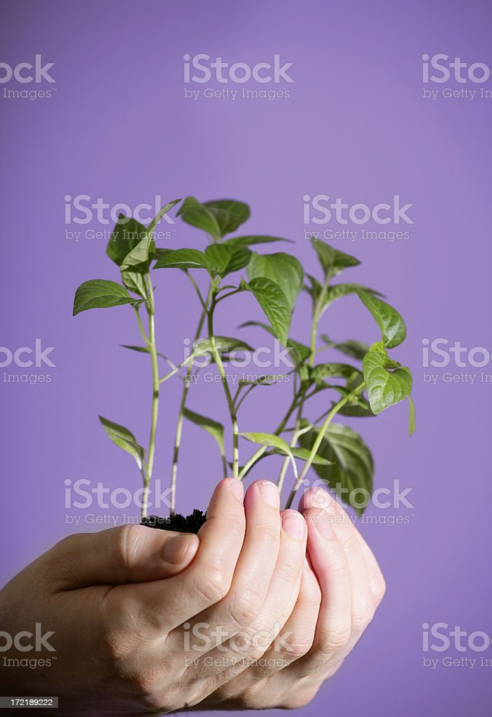 New life royalty-free stock photo