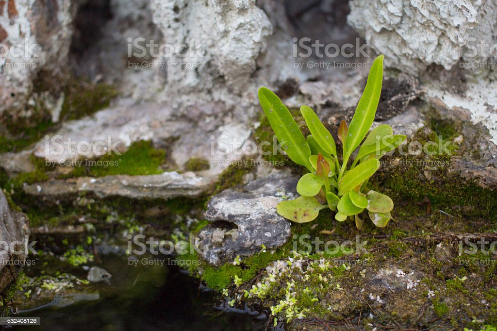 Новая жизнь дерево с роста на скале с камнями Стоковые фото Стоковая фотография