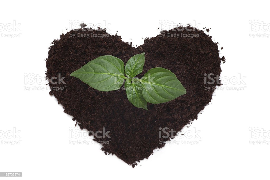 New Life.Green Plant from Heart Soil. royalty-free stock photo