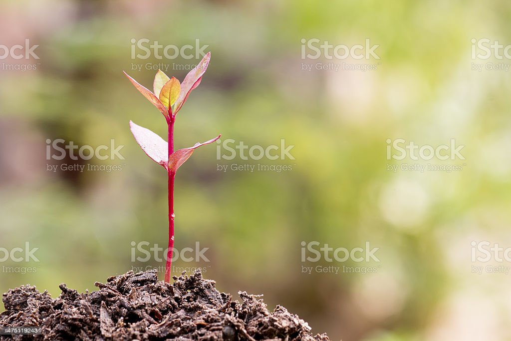 New life-plant growing stock photo