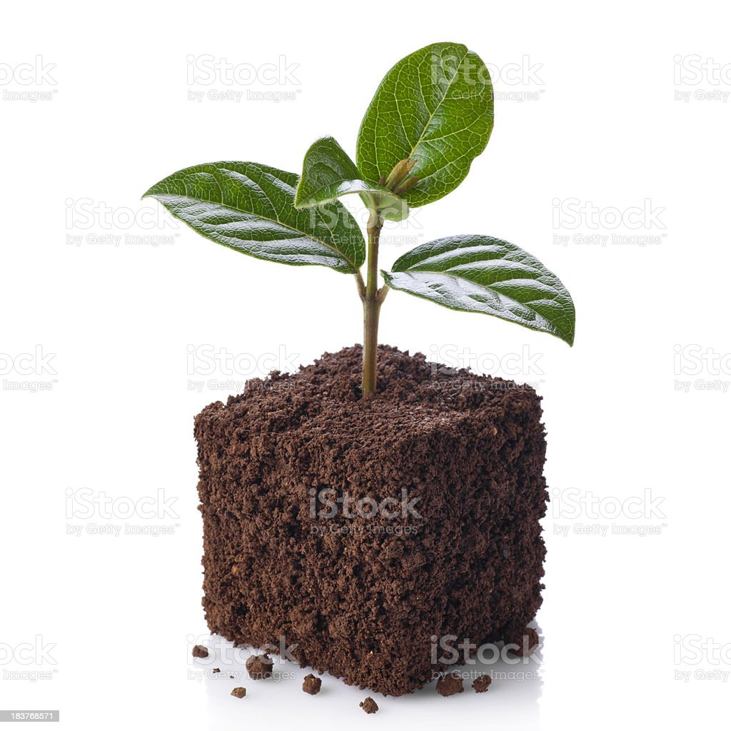 New life.Young sprout growing royalty-free stock photo