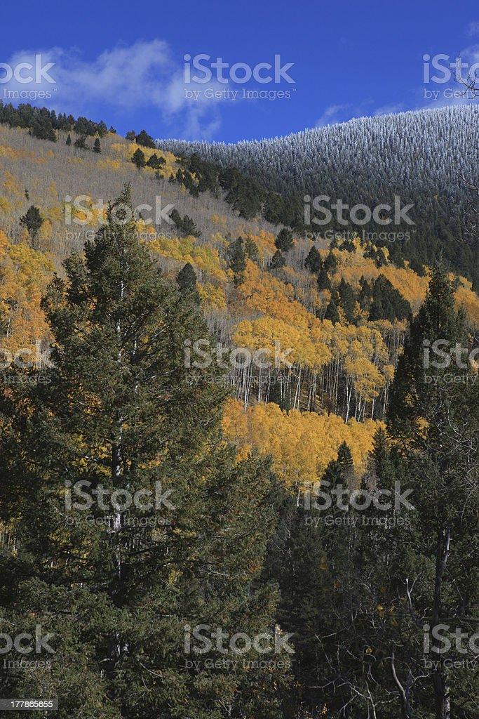 New Mexico Aspen Landscape stock photo