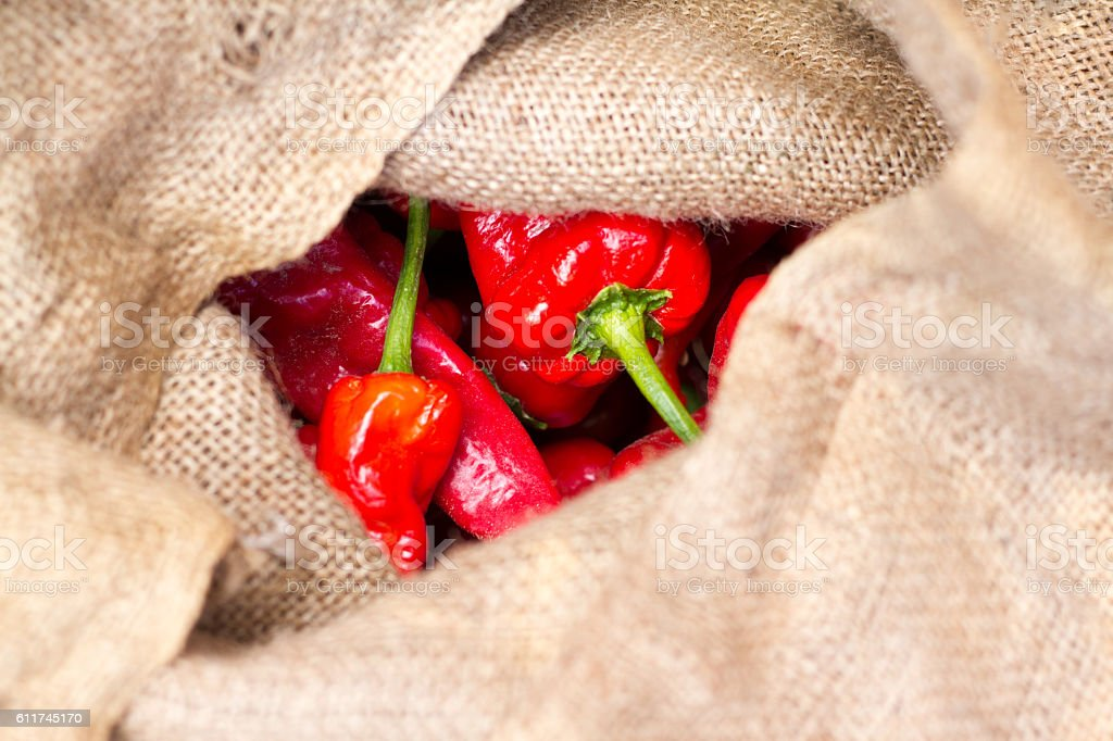 New Mexico Harvest: Red Chili Peppers in Burlap Sack (Close-Up) stock photo