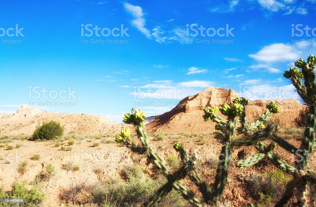 New Mexico Southwest Desert Landscape; Cholla Cactus stock photo